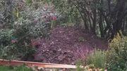 Erdaushub Gartenerde zu verschenken