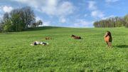 Pferdebox Frei