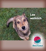 Lee - unser Mini Wolf