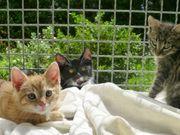 8 süße bunte kitten katzenkinder