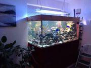 Meerwasser Aquarium 1100 Liter