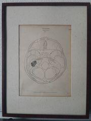 Kunstdrucke Anatomie