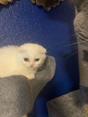 Weiße Kätzchen sucht nach eine