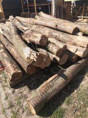 Holzstämme Frisch