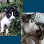 Katzenkumpels Finix und Turner wollen