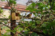 1 0 Silberohr Sonnenvogel