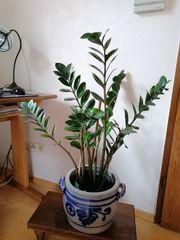 Zimmer- Gartenpflanzen und Fachliteratur