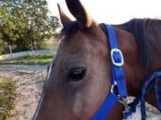 Pferdchen sucht Pflegebeteiligung