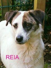 Reia- wortkarger Eigenbrötler gesucht