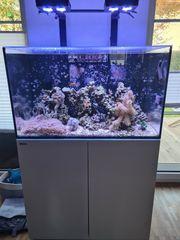 RED SEA Reefer 250 mit