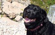 9 jährige Labrador Hündin schwarz