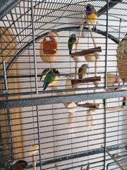 Grosser Käfig mit Vögeln