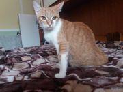 Handicap Katze Coco sucht liebevolles