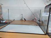 Aquarium oder Terrarium