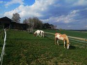 Pferdebox Reitunterricht Offenstall und Box