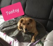 Hündin Tootsy sucht neues Körbchen