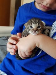 Babys Kätzchen