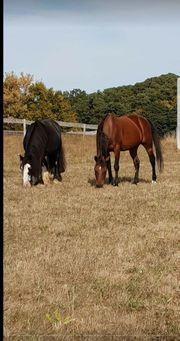Suche stall für 2 pferde