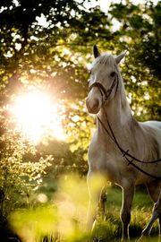 Freie Pferdeboxen im Ammerland auf
