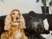 Biete Hundebetreung mit Herz Verstand