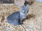 Katzenkind sucht Familie mit Garten