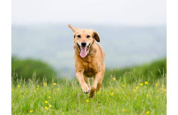Hundebetreuung Gassigehen