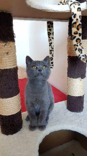 Kitten Kater sucht neues Zuhause