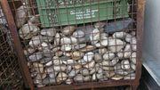 Kieselsteine Zierkies Gartenkies große Steine