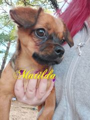 Matilda auf Pflegestelle in Schwedelbach