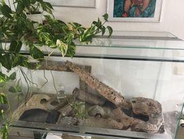 Gecko Leopardgecko Terrarium