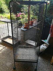 Zwei tolle Vögel Käfige zu