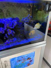 Privatverkauf meine Meerwasserfische 2 Doktorfische