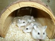 Großer Holztunnel für Hamster Zwerghamster