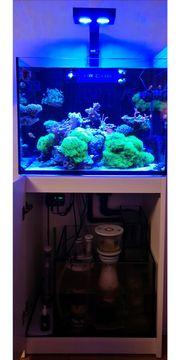 Red Sea Reefer komplett mit