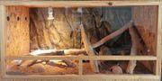 Terrarium mit 4 Leopardgeckos w