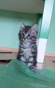 Katzenbabys suchen neues Zuhause
