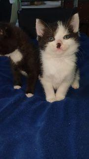 Zwei Katzenbabys suchen ein Zuhause