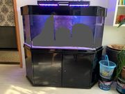 Meerwasser Aquarium 540 L in