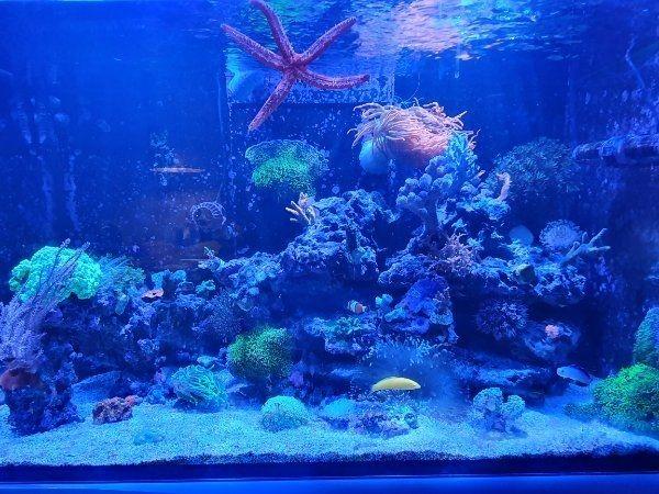 Meerwasseraquarium Aquarium Red See Reefer