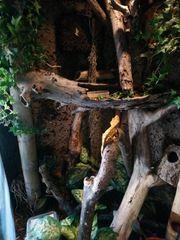 Komplettes Terrarium Set mit Kronengecko