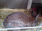 Kaninchen mit handicap 5 Monate