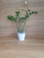Pflanze mit Topf
