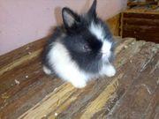 Vier tolle Kaninchen Männchen und