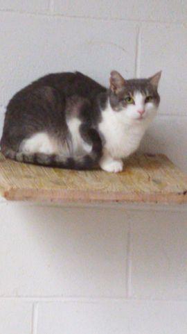 Byakko und Seiryu suchen ihr: Kleinanzeigen aus Waldbronn - Rubrik Katzen