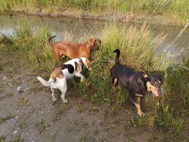 Hundebetreuung Gassiservice Tagesbetreuung Urlaubsbetreuung: Kleinanzeigen aus Lauterach - Rubrik Tierbetreuung