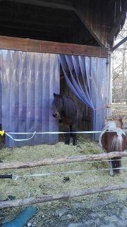 Einstellplatz für Ponyreitbeteiligung