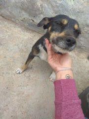 Liebe süsse Terrier-Mischling Lina sucht