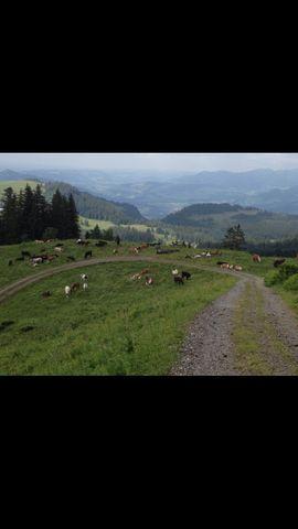 Tierbetreuung - Alpplatz für Pferde