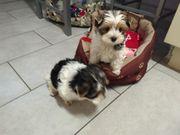 Hundesitting daheim