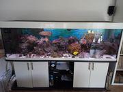Meerwasser Aquarium komplett 200x60x60